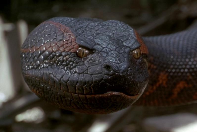 хамелеон фото самых длинных змей на планете для стенда