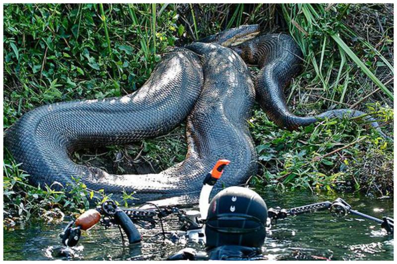 фото самых длинных змей на планете времени хватило